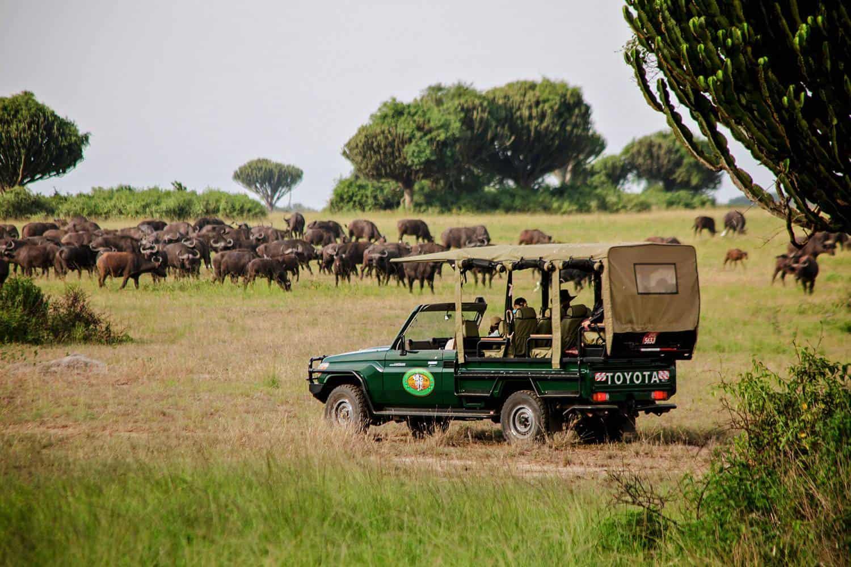 How To Plan The Best 2021-2022 Wildlife Safari For Uganda