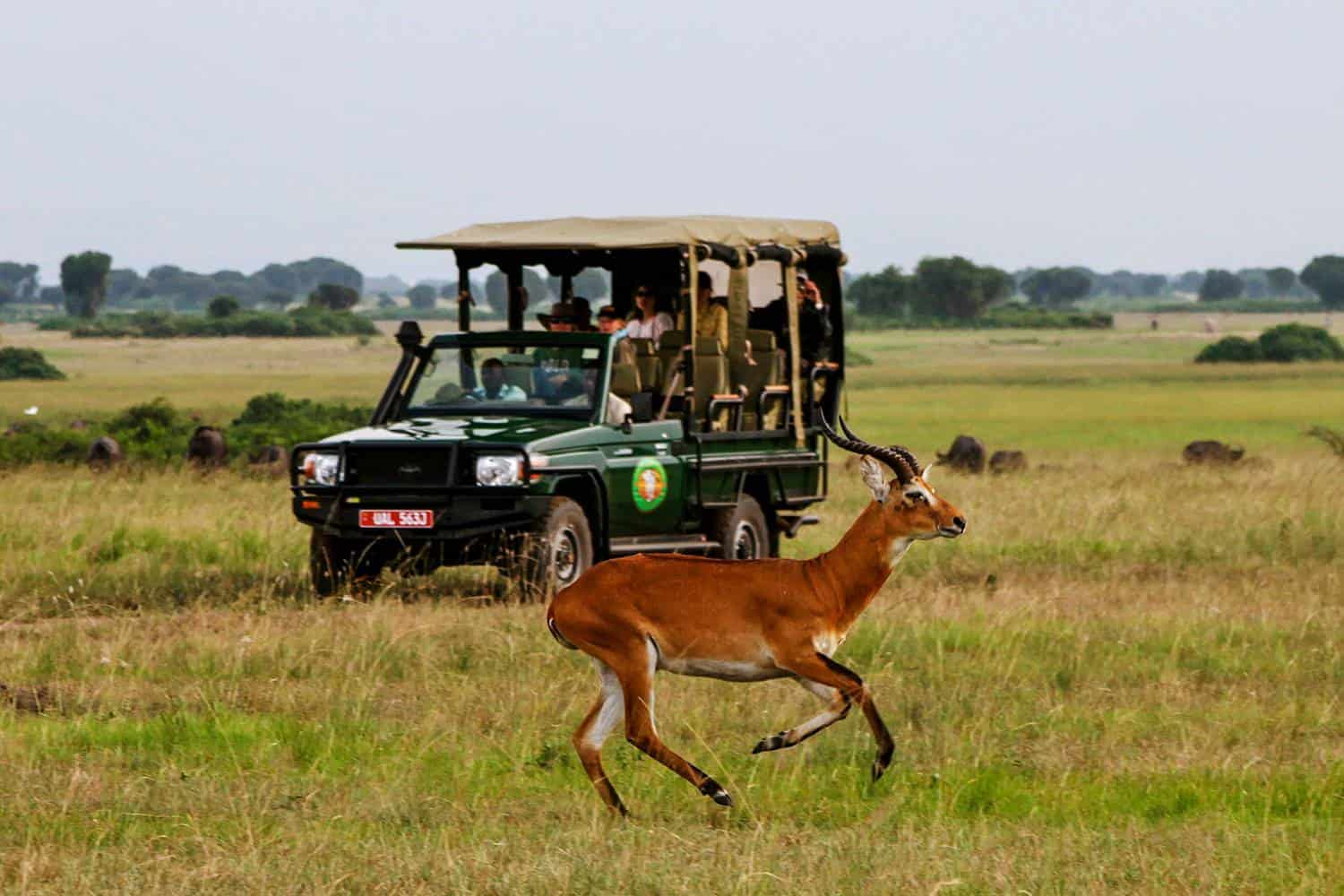 Game Drives To View The Diverse Wildlife Of Queen Elizabeth