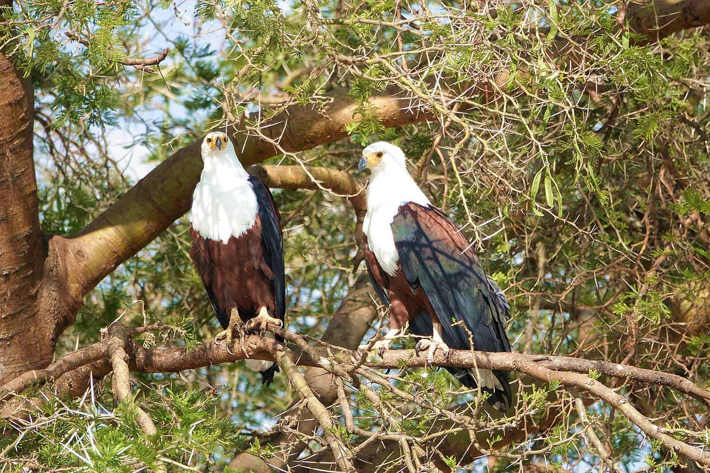 Birdwatching Safaris In Different Habitats Of Queen Elizabeth