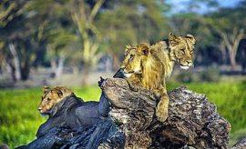 KENYA SAFARI FROM NAIROBI
