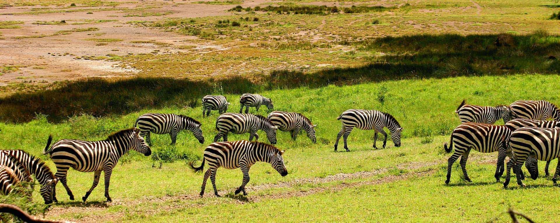 safari mania