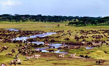VALUE TIER 3 - NORTHERN TANZANIA MIGRATIONS & EXPLORATIONS SAFARI