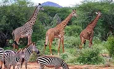 GUIDE ON TSAVO WEST PARK