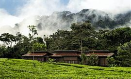 PLACES TO STAY IN NYUNGWE