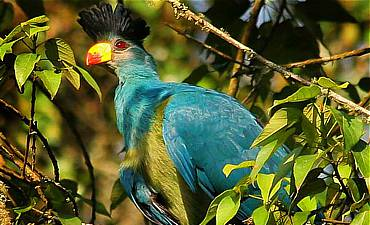 BIRDING SAFARIS IN RWANDA
