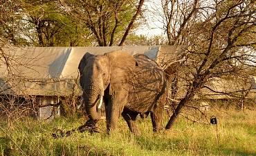 DELUXE TIER 2 - BEST OF TANZANIA SAFARI