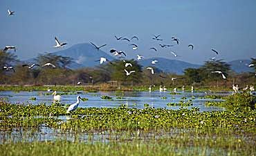 SAFARI & TOUR IN LAKE NAIVASHA