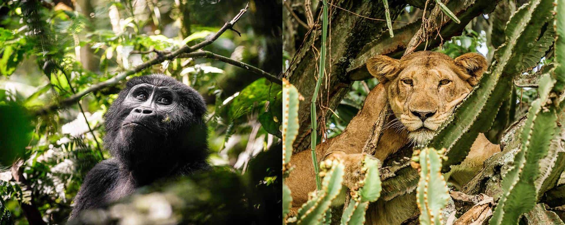 Photo Safaris Trip Planning Guide For Uganda