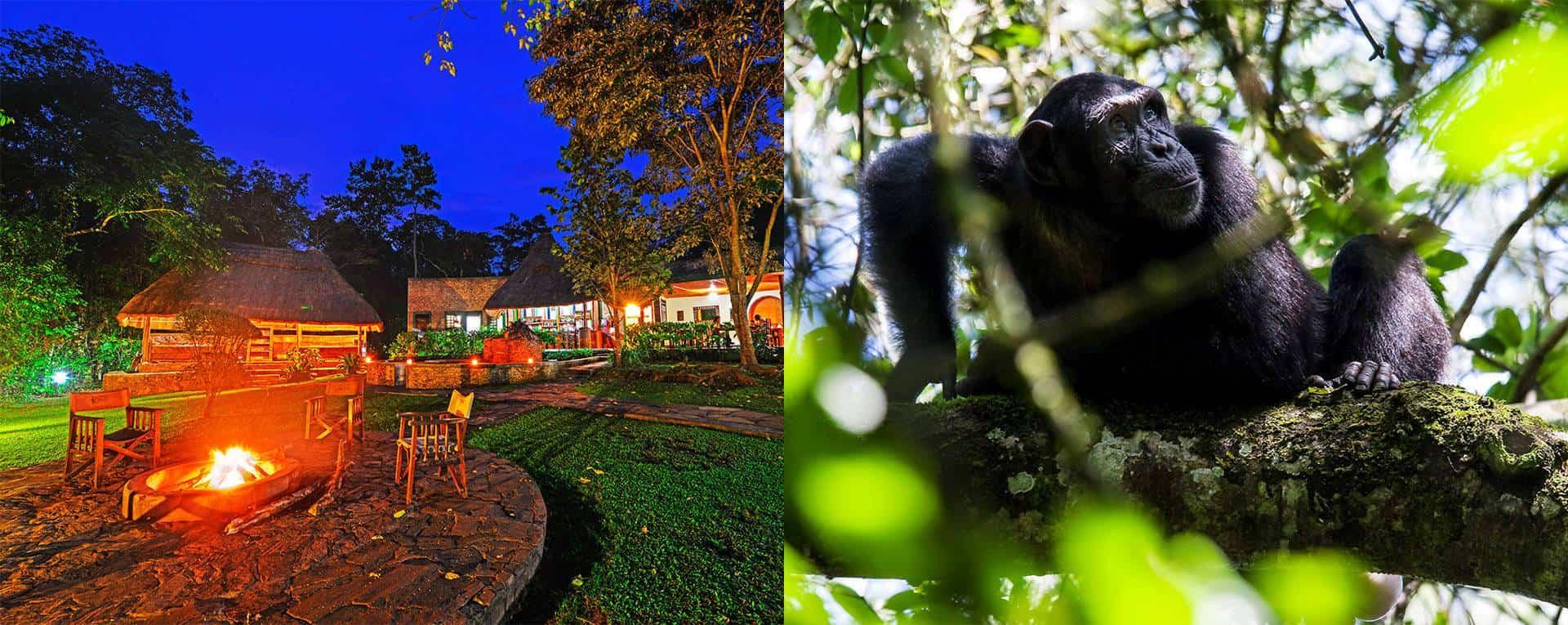 Primate Lodge