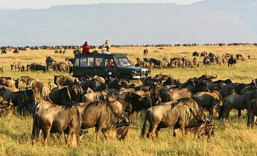 GUIDE ON MASAI MARA