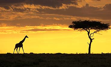 When to travel | Best time to visit | Masai Mara ...