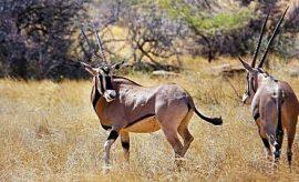 WILDLIFE SAFARIS TO KENYA