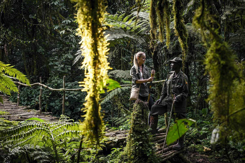 How To Prepare For Your Uganda Gorilla Safari