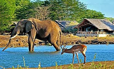 GUIDE ON TSAVO EAST PARK