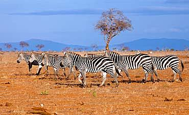 BEST TIME TO VISIT TSAVO EAST