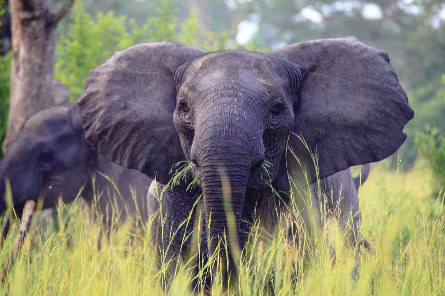 What Are The Wildlife Experiences In Semliki Wildlife Reserve