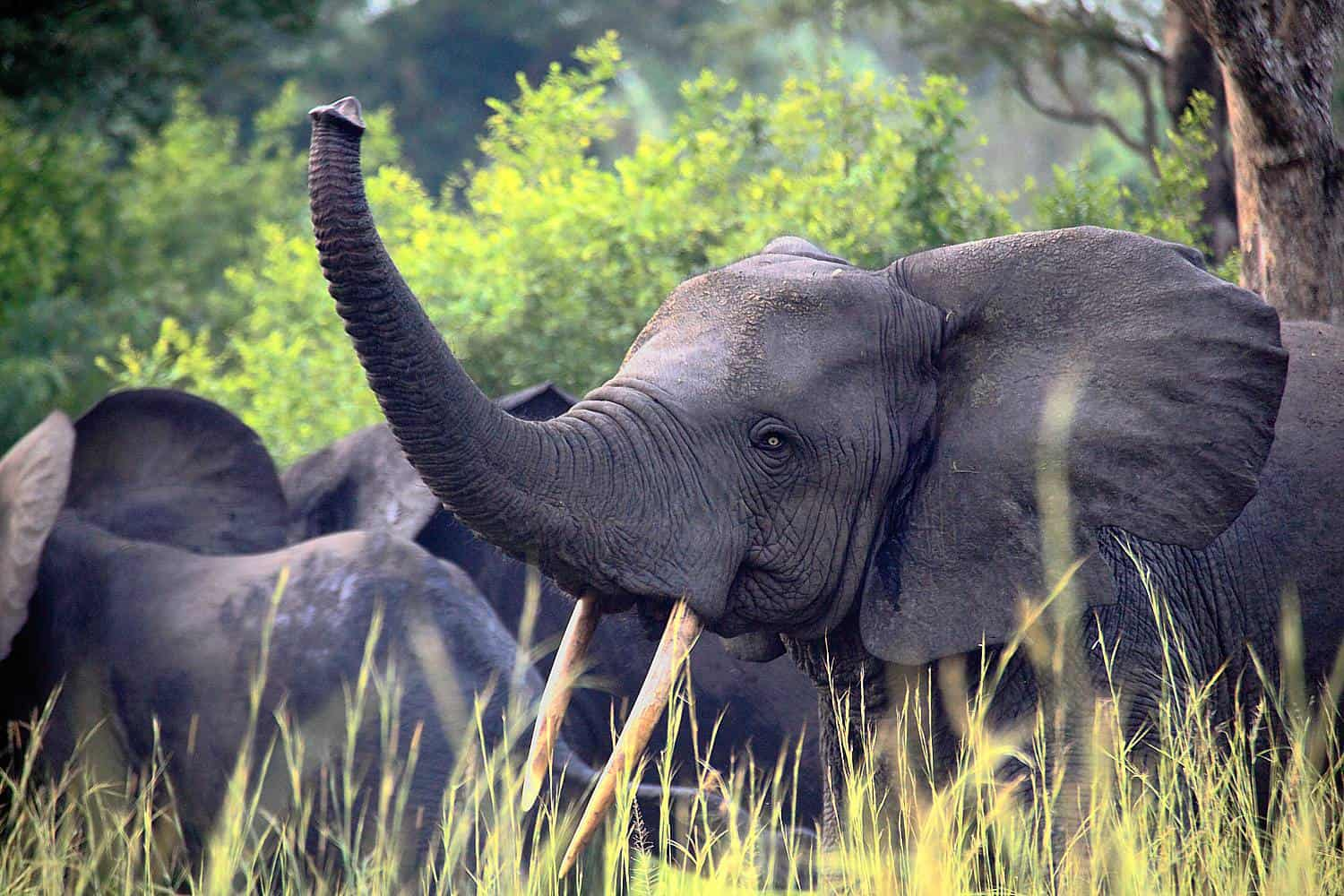 Our Top 5 Safari Activities In Semliki & Things You Can Do & See In Semliki