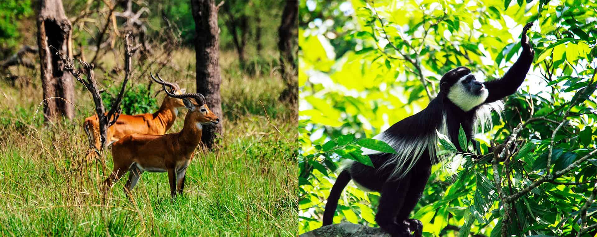 Semliki Wildlife Reserve