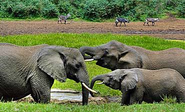 SAFARI & TOUR IN MOUNT KENYA