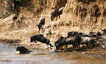10 DAYS - NORTHERN TANZANIA MIGRATIONS & EXPLORATIONS