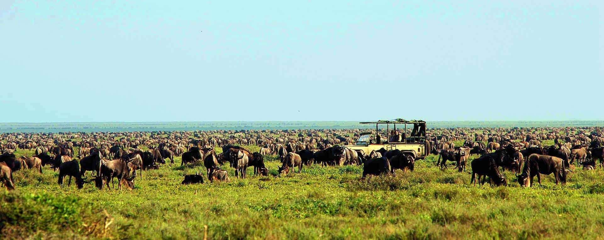 serengetisafaricamp2