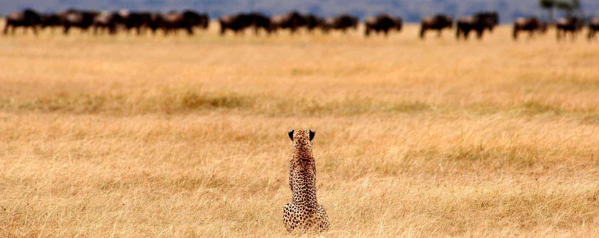 serengetisafaricamp4