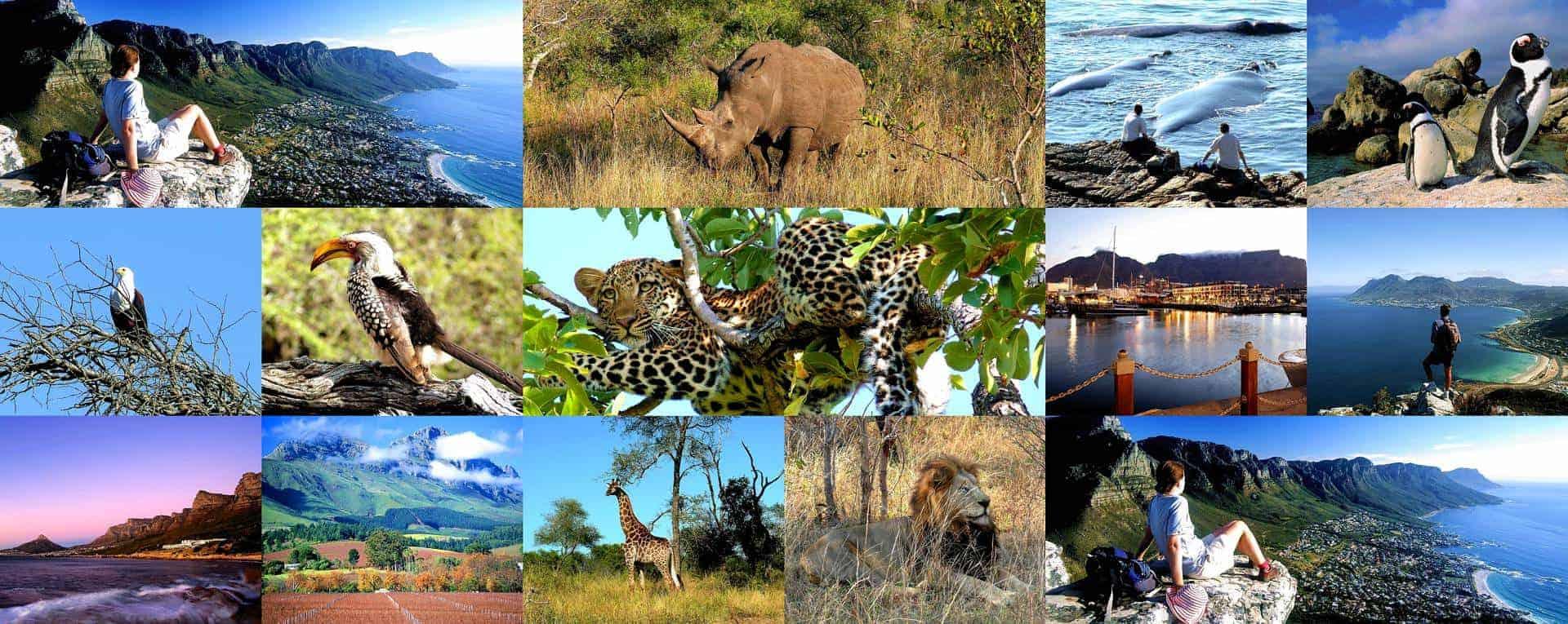 Safari Tour Guide Jobs