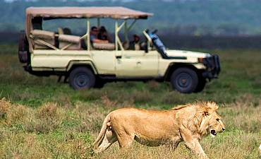 SAFARI PRICES FOR TANZANIA
