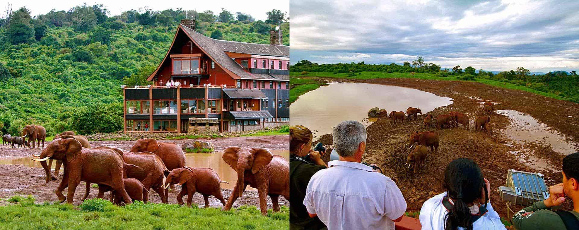 Expert Rating Reviews >> The Ark, Aberdare - Kenya - AfricanMecca Safaris & Tours