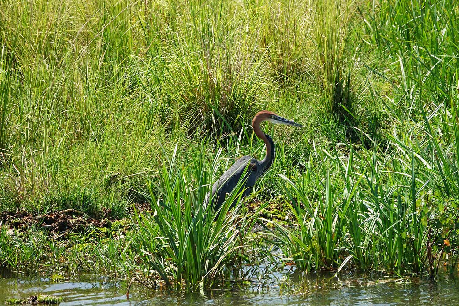 Birdwatching On The Nile River In Jinja & Mabira Forest